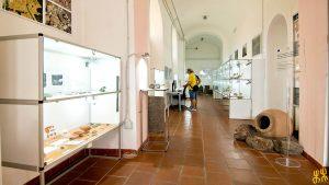 museo_archeologico_Dorgali_FCD2162-BS